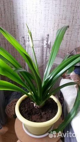 купить растения на авито москва основная