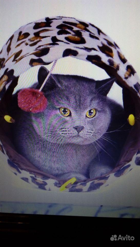 Тунель-домик для кошки в Зеленограде - фотография № 2