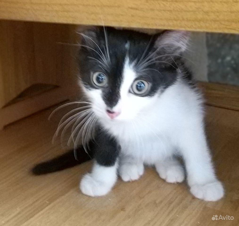 Котенок мальчик 2месяца