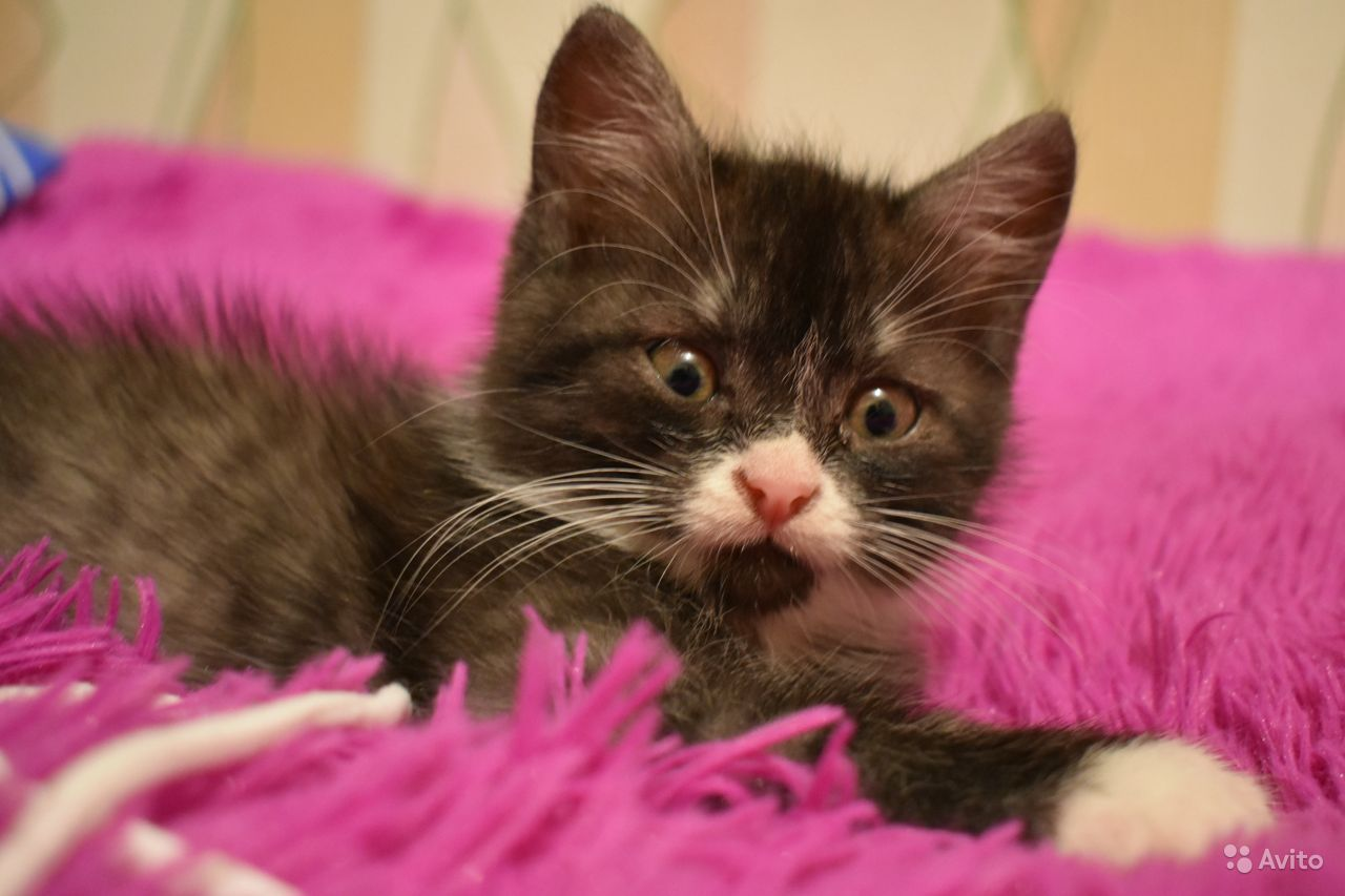 Отдам котёнка в добрые руки - фотография № 1