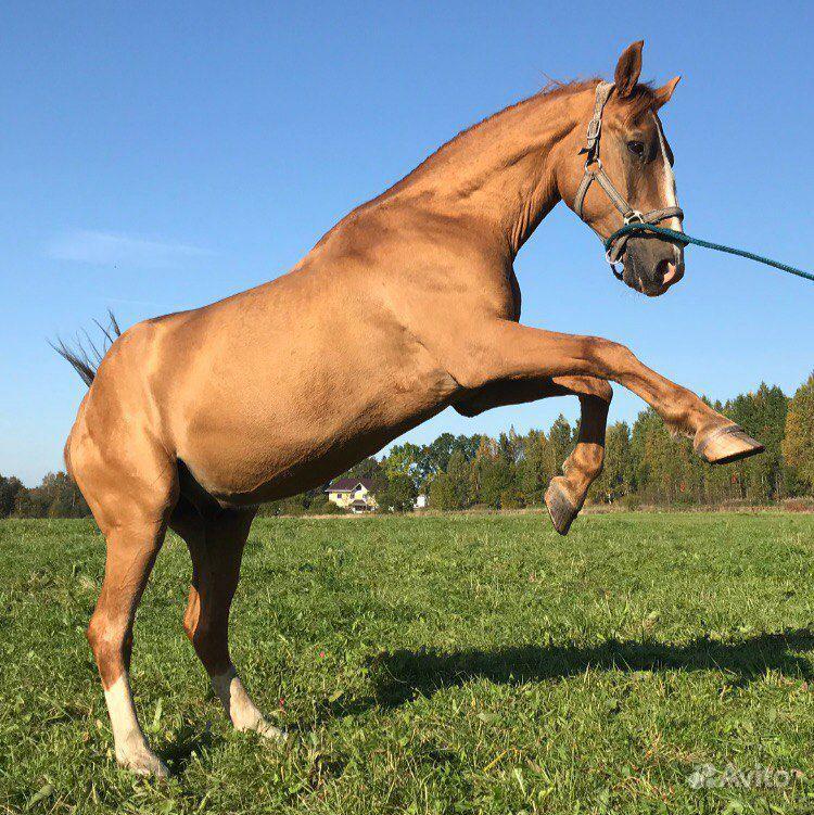 Конные прогулки и занятия верховой ездой купить на Вуёк.ру - фотография № 2