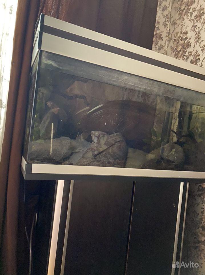 Аквариум 120 литров, с тумбой купить на Зозу.ру - фотография № 1