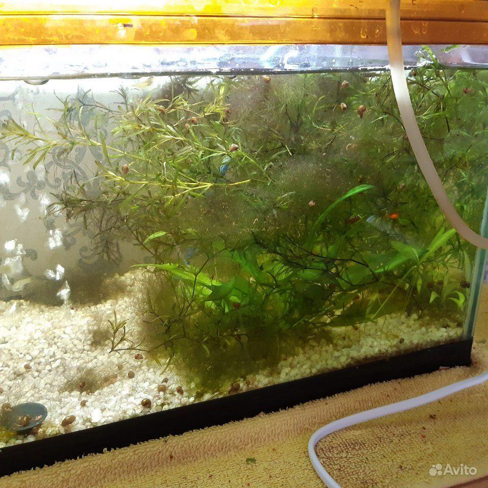 Растение для аквариума купить на Зозу.ру - фотография № 1