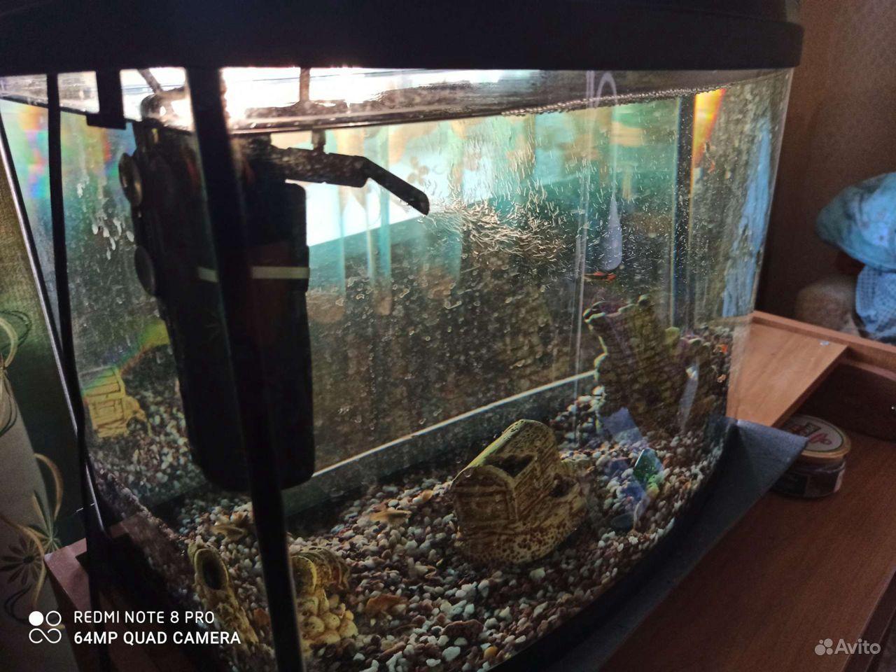 Аквариум, рыбки гуппи купить на Зозу.ру - фотография № 2