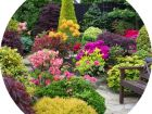 Устройство цветников и клумб на участке