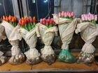 Тюльпан оптом Красноярск без посредников
