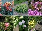 Многолетники садовые