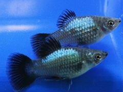 Продам аквариумных рыбок и растения