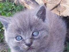 5 обаятельных котяток ищут добрые руки