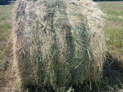 Продается сено