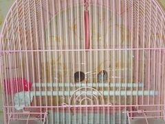 Птицы Амадин