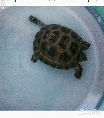 снижает отдам сухопутную черепаху в хабаровске главная