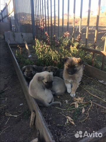 правила ухода собаки щенки в дар на авито в улан-удэ Архив новостей