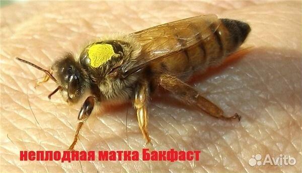 Пчелы в рязани купить