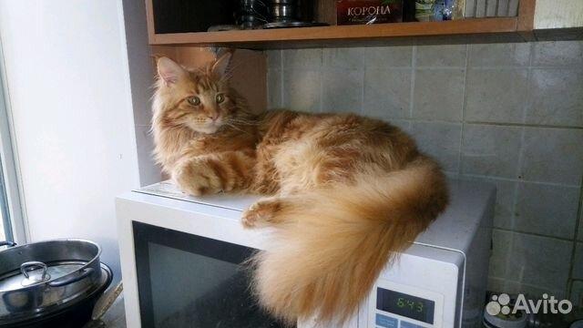 Сайт с красным котом
