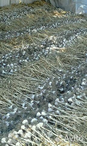 женщины продам чеснок ростовская область сколько
