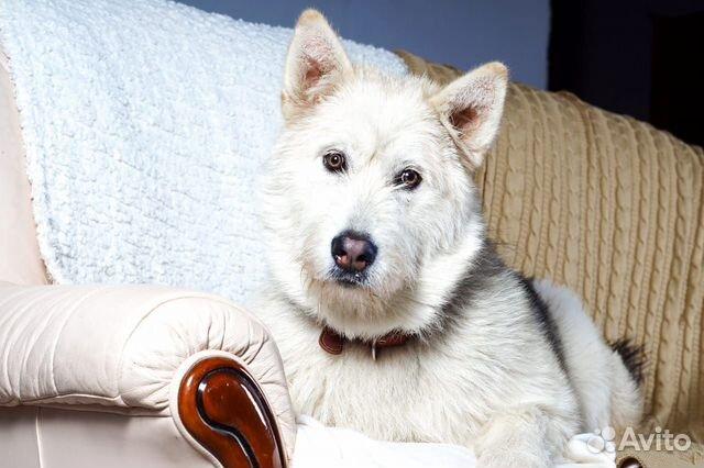 Юла потрясающая девчонка Собака в добрые руки купить на Зозу.ру - фотография № 2
