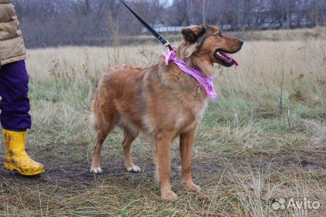 Собака в дар для семьи купить на Зозу.ру - фотография № 5