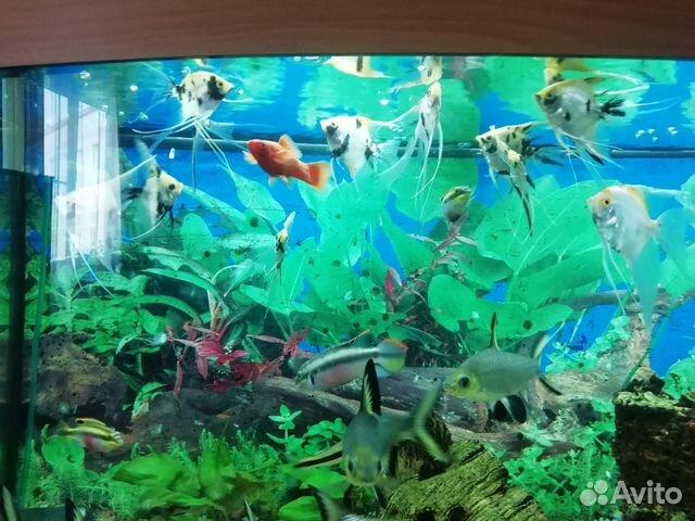 Аквариумные рыбки купить 1