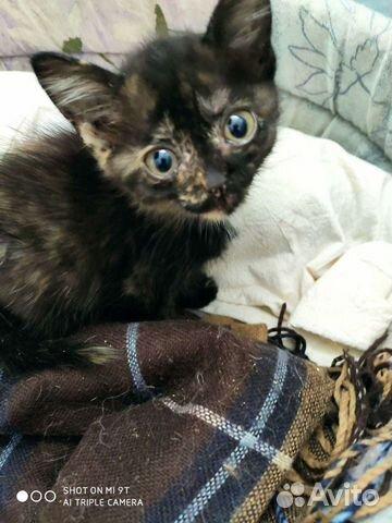 Kitten girl  buy 1