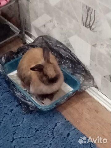 Кролик  купить 1