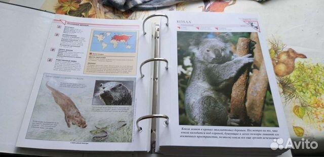 Каталоги по животному миру. 4 тома по 500р. За все  89012828080 купить 2