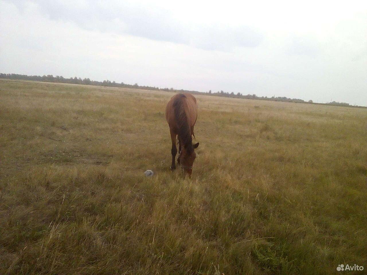 Лошадь жеребушка  89502100369 купить 5