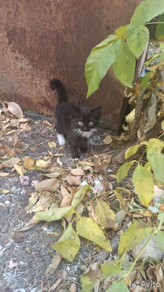 Кошка  89383050600 купить 3
