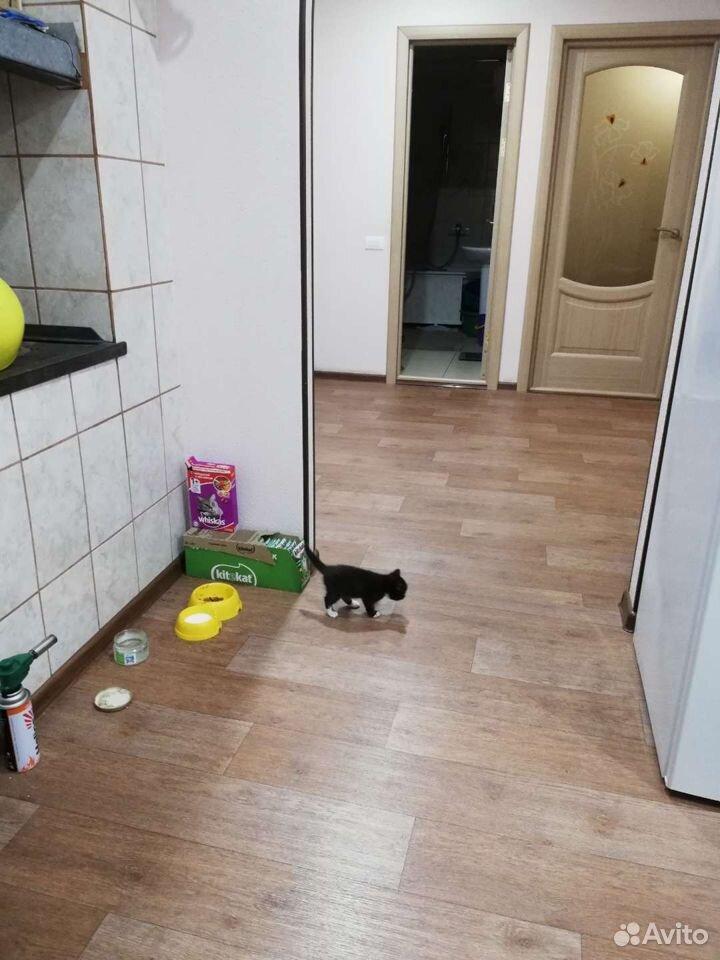 Котенок девочка  89831883735 купить 8