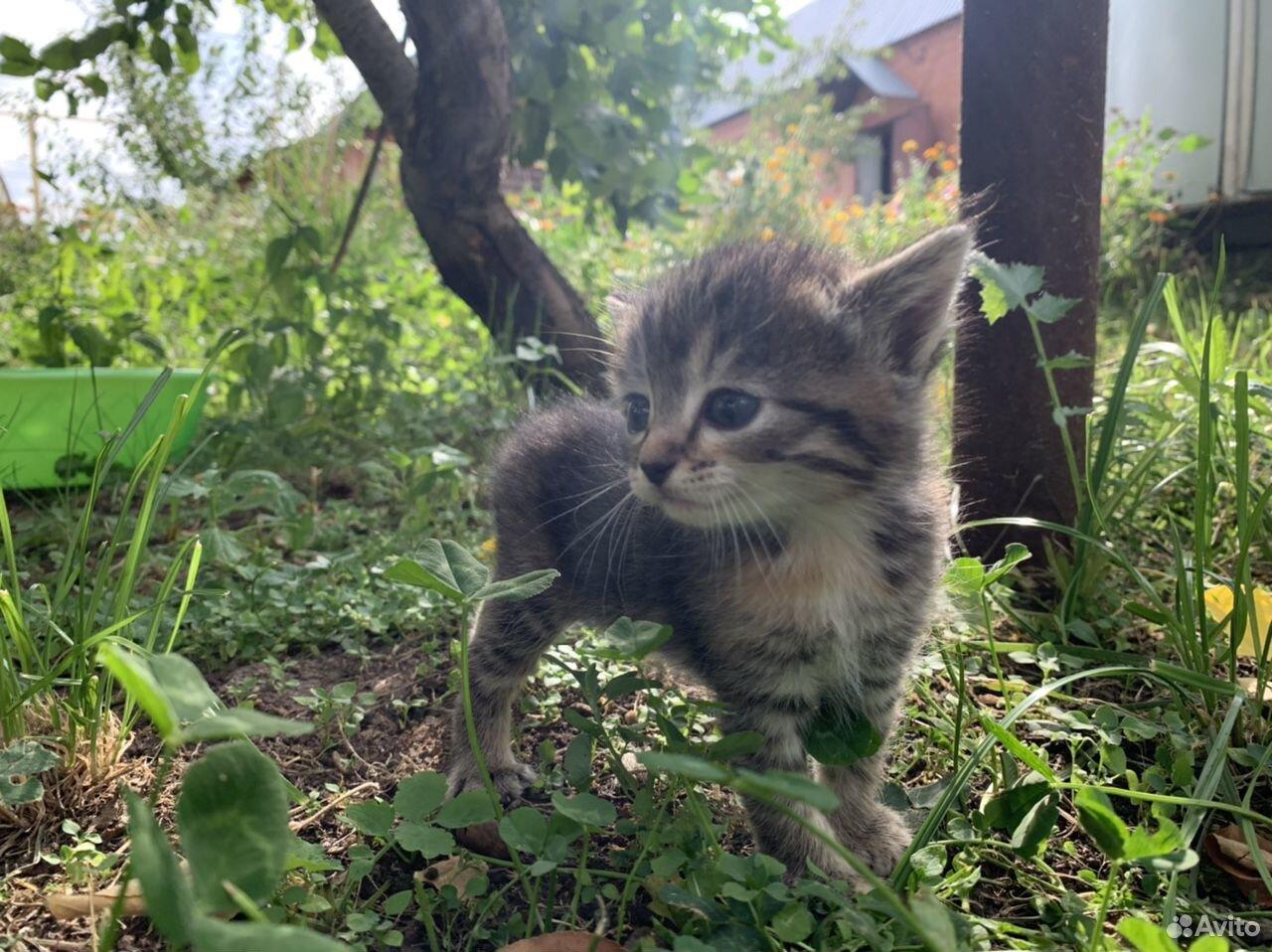 Кошка  89225313101 купить 2