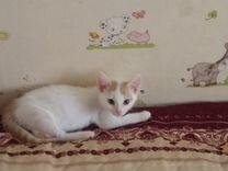 Котик мальчик Марти