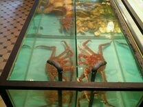 Торговый промышленный аквариум