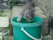 Котик Cава