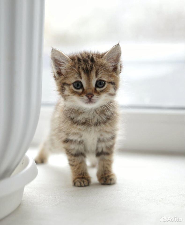 Отдам котят  89129770244 купить 4