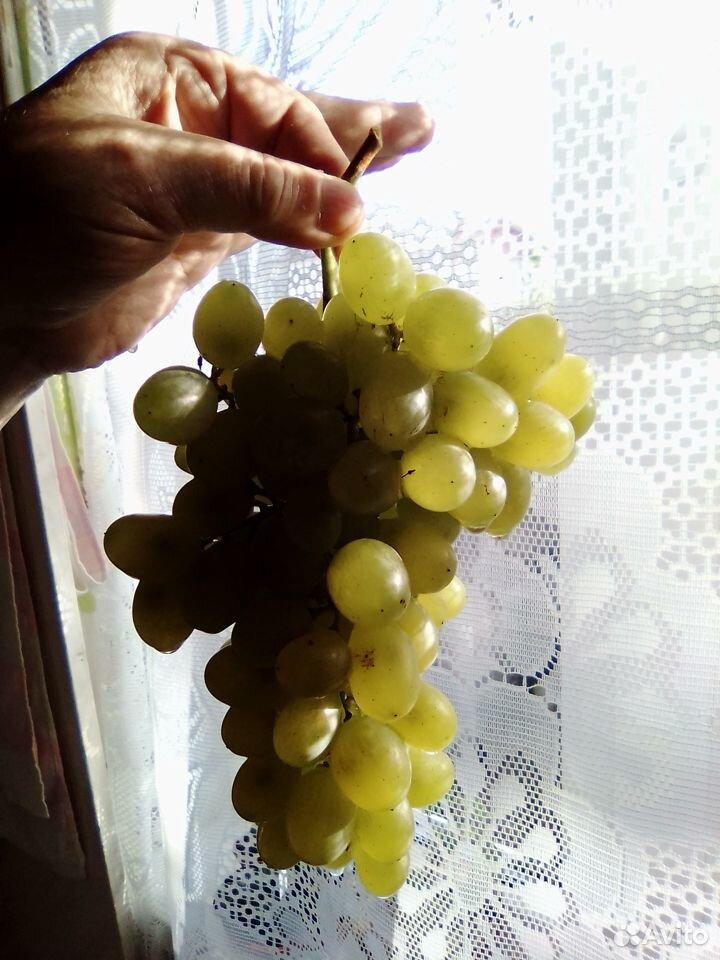 Черенки винограда  89531243354 купить 3