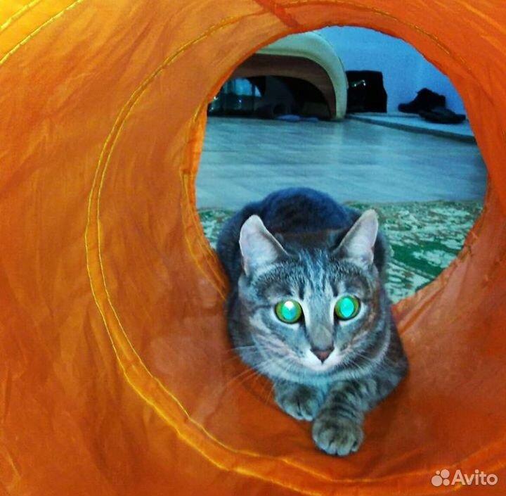 Geb die Katze in gute Hände  89236062474 kaufen 4