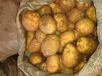 Картофель, Картошка деревенская