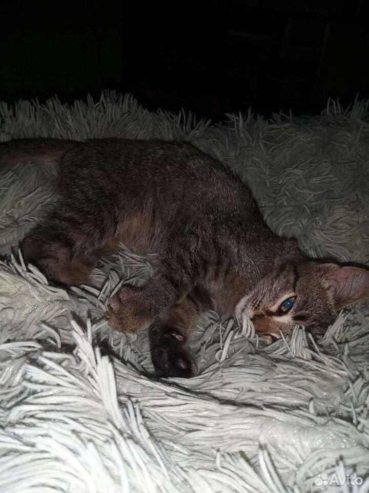 Отдам серого котенка в добрые руки  89502787846 купить 4