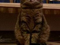 Мурка - Карамелька, кошка (1 год)